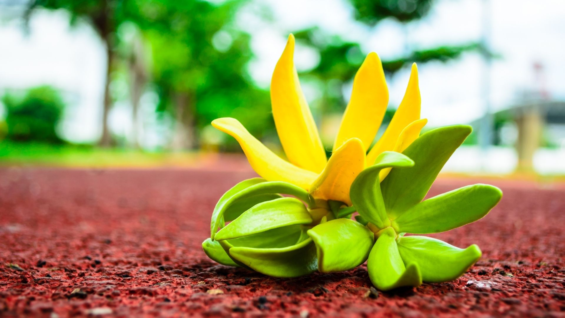 Happy Oils huile essentielle ylang-ylang